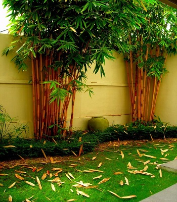 House of green completed gardens feroze o 3 30 garden for Garden designs sri lanka