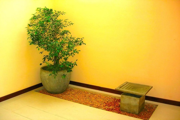 House of green indoor plants russel 1 6 garden for Home landscape design sri lanka